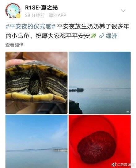 xia zhiguang r1se turtle